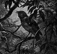 the symbolism and imagery in ode to a nightingale by john keats Use of birds in keats' ode to a nightingale and shelley's to  'ode to a nightingale' this essay discusses the numerous symbolism and imagery john keats uses.