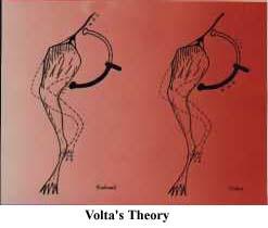 Galvani Volta and Animal Electricity